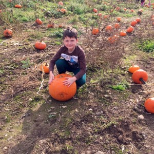 George in the pumpkin patch
