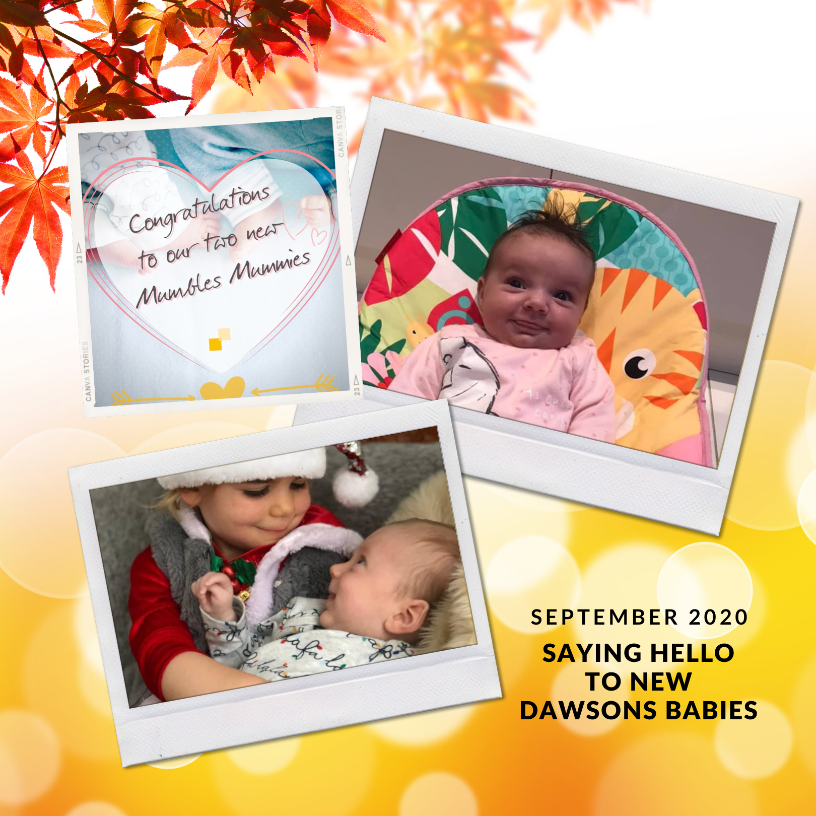 Dawsons welcome 2 new babies into their family