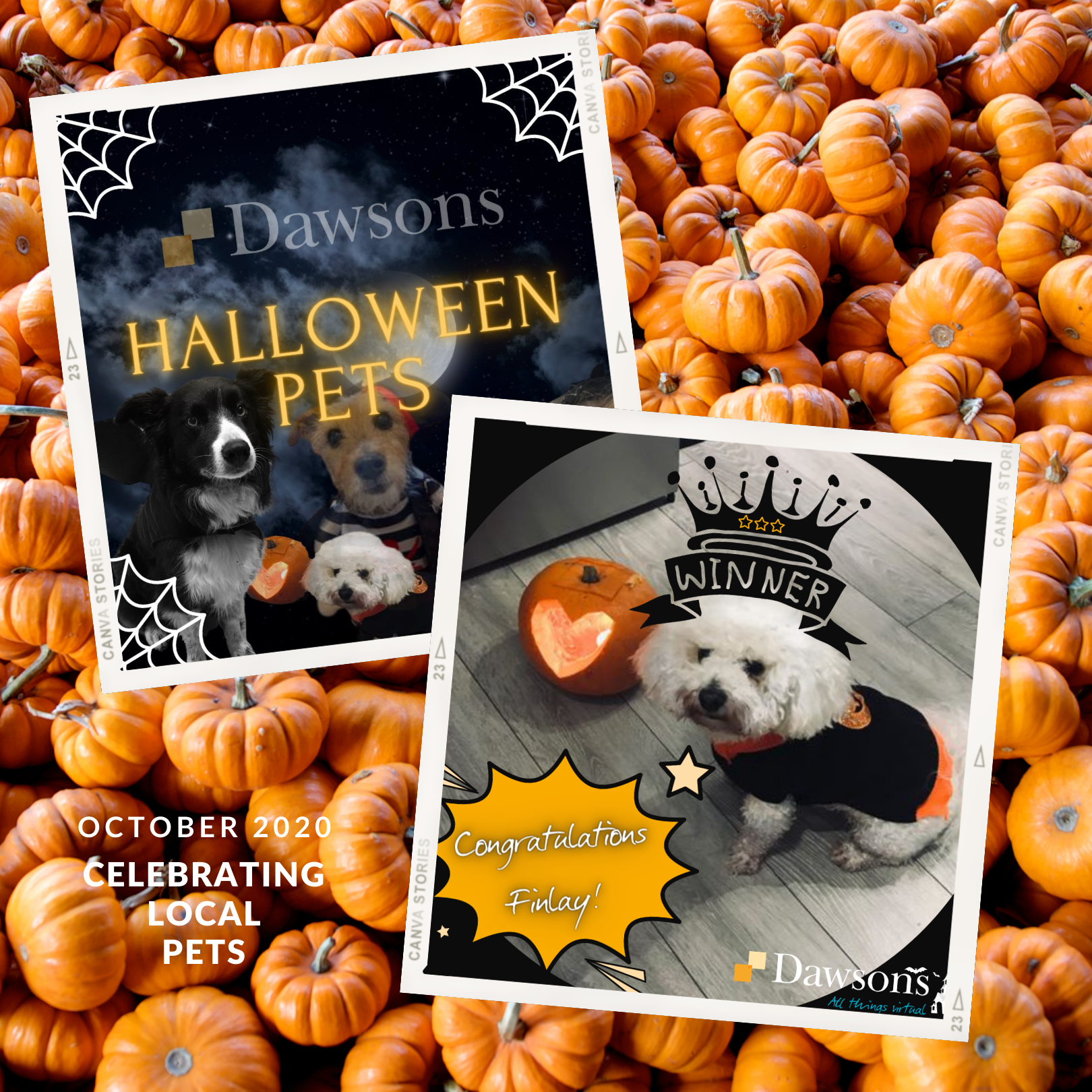 Dawsons hallowe'en competition for pets in Swansea with Safelight Images